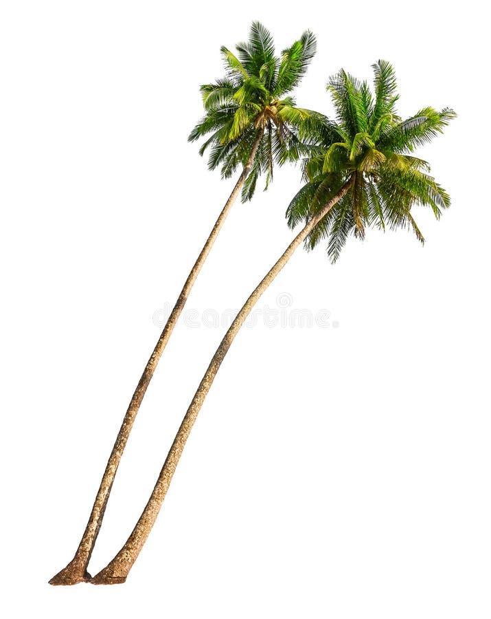 Kokosnotenpalmen stock fotografie
