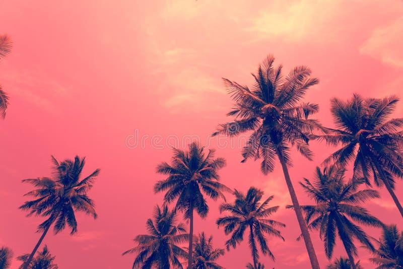 Kokosnotenpalmen - de Tropische vakantie van de de zomerwind, Kleurenpret t stock afbeelding