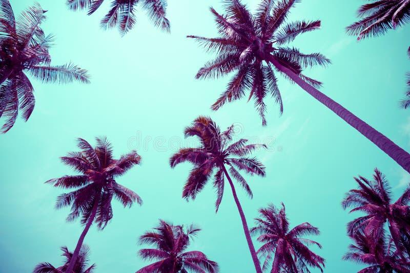 Kokosnotenpalmen - de Tropische vakantie van de de zomerwind, Kleurenpret t royalty-vrije stock foto's