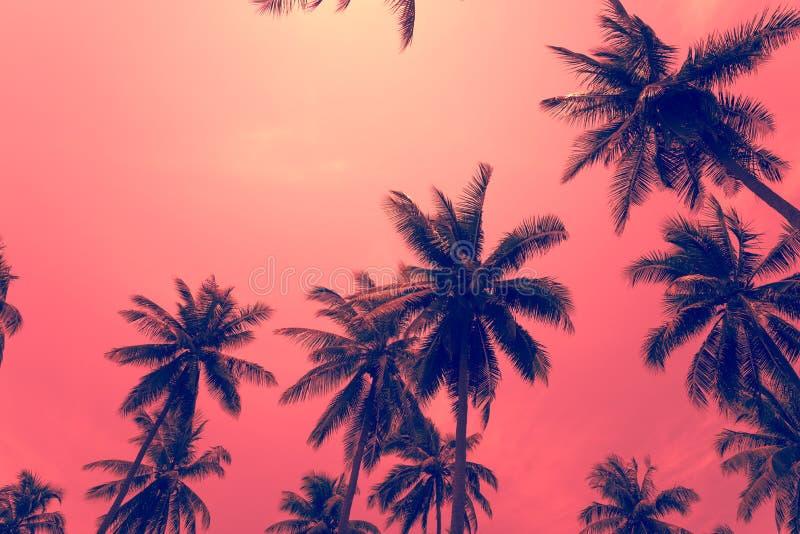 Kokosnotenpalmen - de Tropische vakantie van de de zomerwind, Kleurenpret t stock fotografie