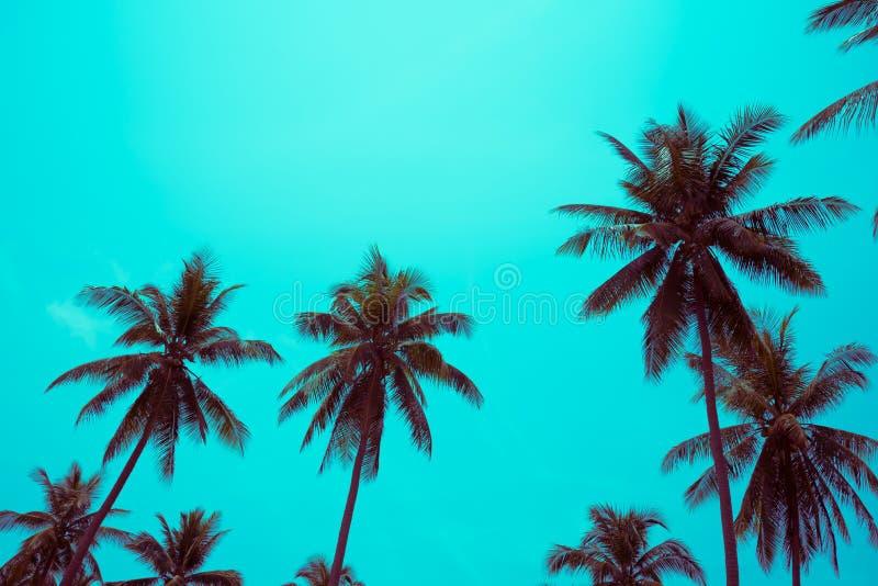 Kokosnotenpalmen - de Tropische vakantie van de de zomerwind, Kleurenpret t royalty-vrije stock fotografie