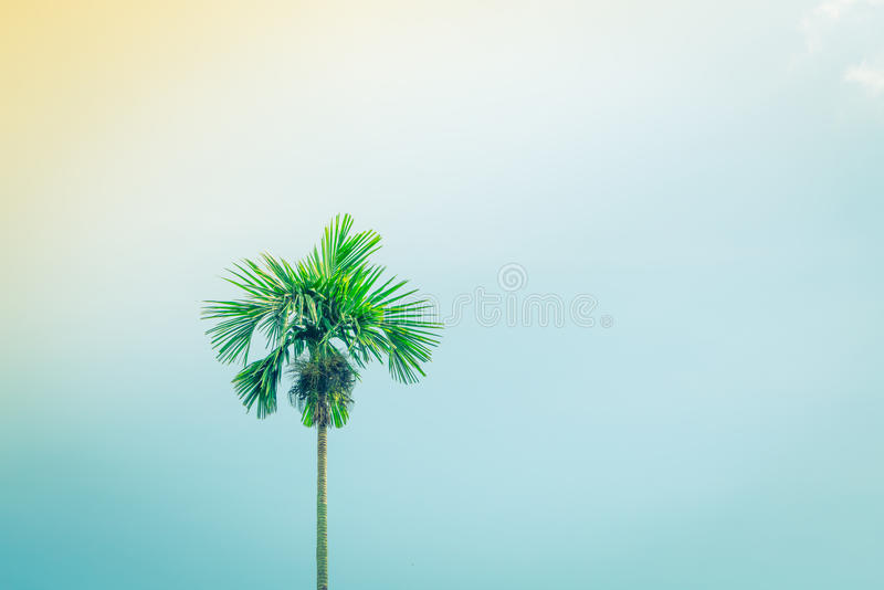 Kokosnotenpalmen (Gefiltreerd beeld verwerkt uitstekend effect stock fotografie