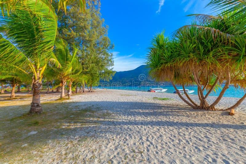 Kokosnotenpalmen op wit zandig strand en blauwe hemel in zuiden van Thailand royalty-vrije stock afbeelding