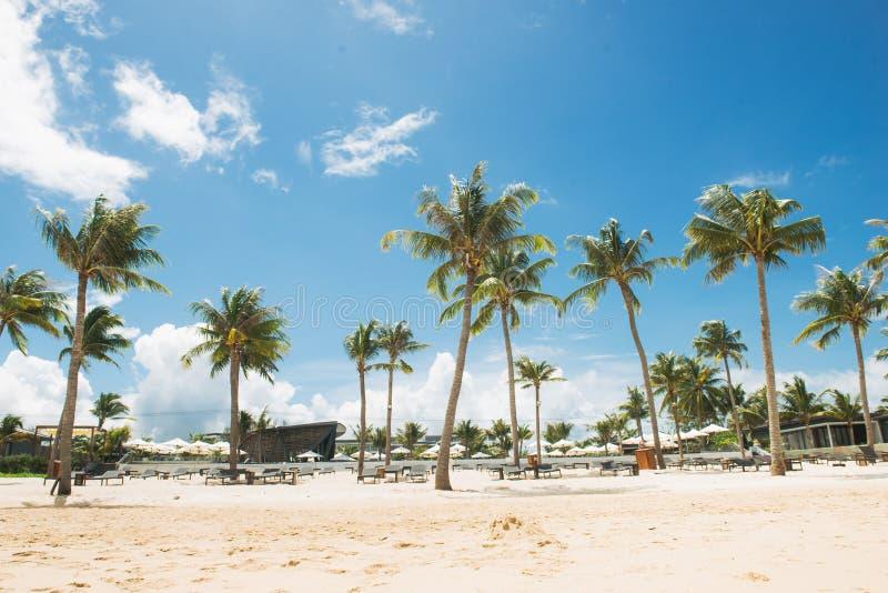 Kokosnotenpalmen op wit zandig tropisch strand De zomervakantie en vakantieconcept royalty-vrije stock foto