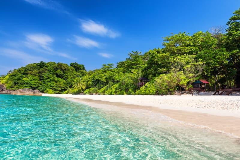 Kokosnotenpalmen tegen blauwe hemel en mooi strand royalty-vrije stock afbeelding