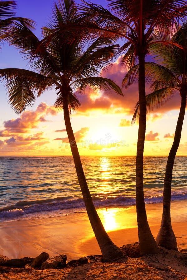 Kokosnotenpalmen tegen kleurrijke zonsondergang in Saona-eiland cari stock afbeeldingen