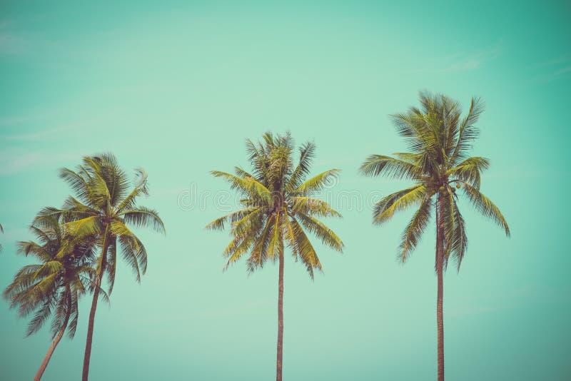 Kokosnotenpalmen in zonnige dag - de Tropische vakantie van de de zomerwind royalty-vrije stock afbeelding