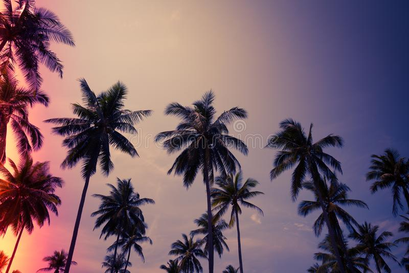 Kokosnotenpalmen in zonnige dag met blauwe hemel - de Tropische zomer stock fotografie