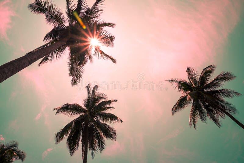 Kokosnotenpalmen in zonnige dag met mooie lensgloed - Trop royalty-vrije stock foto