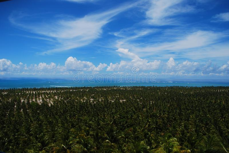 Kokosnotenstrand, Maceià ³, Alagoas, Brazilië royalty-vrije stock afbeelding