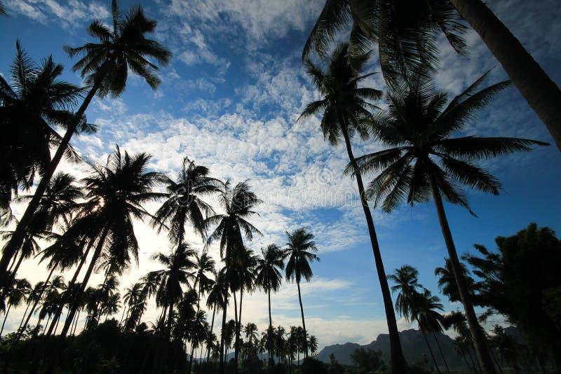 Kokosnotentuin royalty-vrije stock fotografie