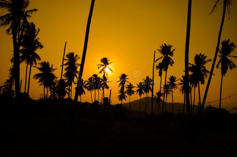 Kokosnotenzonsondergang royalty-vrije stock foto's