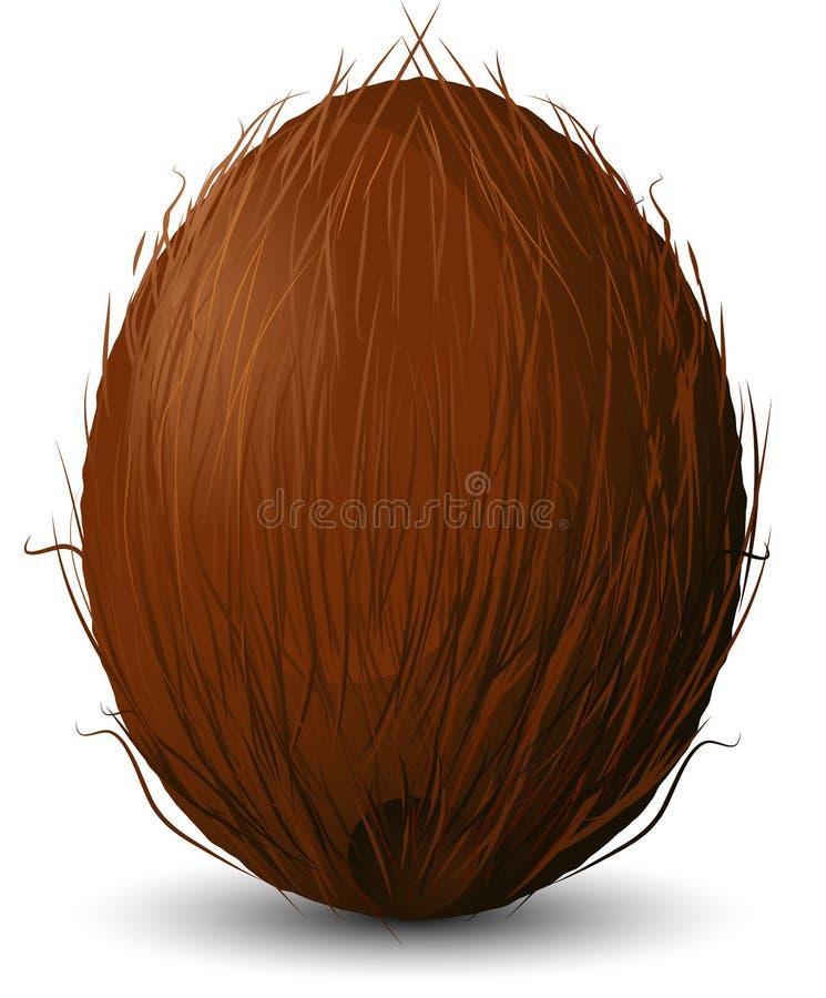 Kokosnuss lizenzfreie abbildung