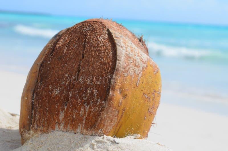 Kokosnuss lizenzfreies stockfoto