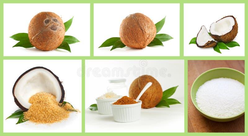 Kokosnuss lizenzfreies stockbild