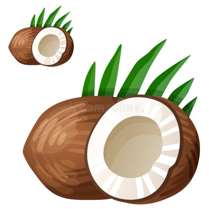 Kokosnuss Ausführliche Vektorikone lokalisiert auf Weiß lizenzfreie abbildung