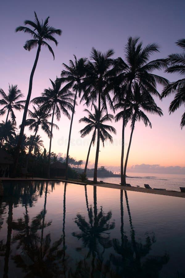 Kokosnuss-Bäume am Sonnenaufgang lizenzfreies stockbild