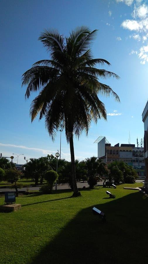 Kokosnuss lizenzfreie stockfotografie