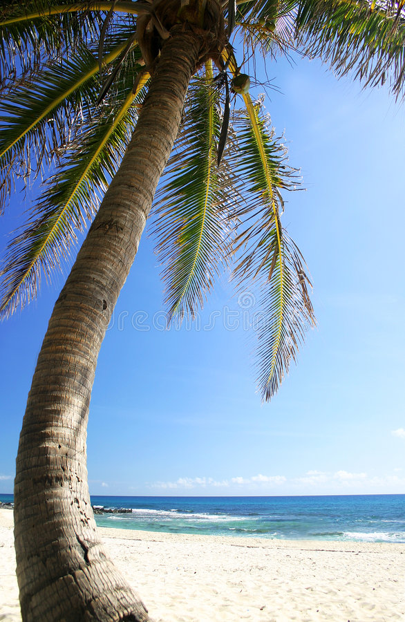 Kokosnuss-Baum und Strand lizenzfreie stockfotos