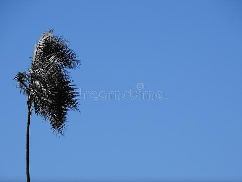 Kokosnuss drei lizenzfreie stockfotografie
