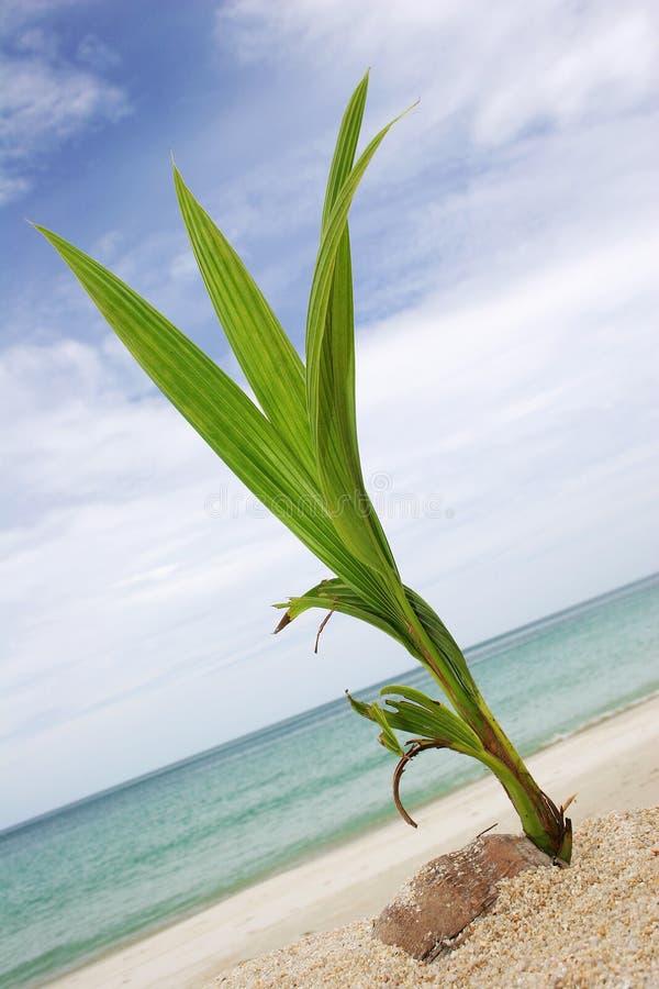 Kokosnuss-Eintragfaden stockbilder