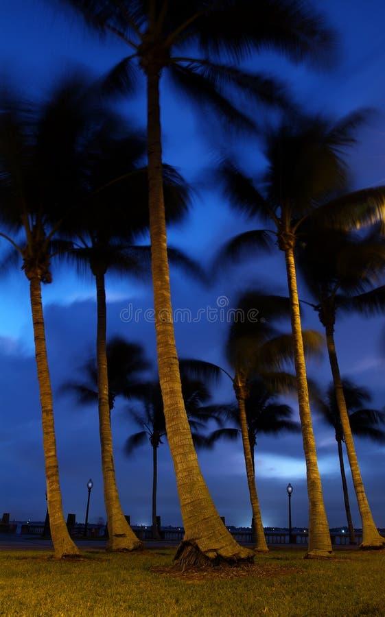 Kokosnuss-Erholungsort stockbilder