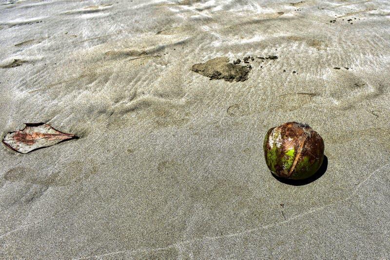 Kokosnuss gewaschen am Strand lizenzfreie stockfotografie