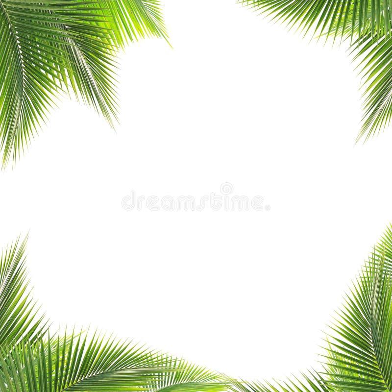 Kokosnuss lässt Rahmen auf weißem Hintergrund stockbild