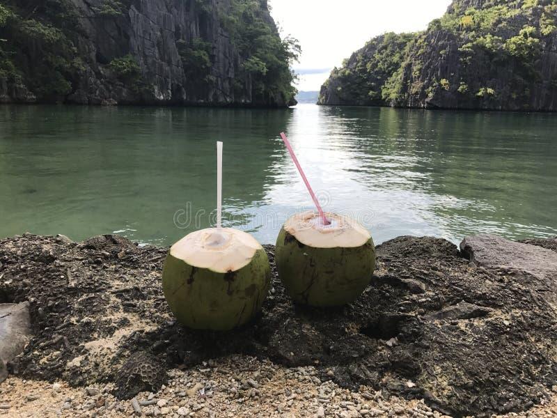 Kokosnuss-Liebe lizenzfreie stockfotografie