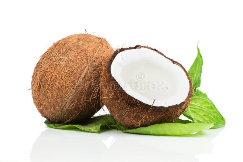 Kokosnuss mit grünem Blatt stockfotos