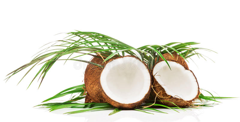 Kokosnuss mit grünem Blatt lizenzfreie stockbilder