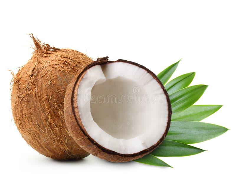 Kokosnuss mit Palmblättern lizenzfreies stockfoto