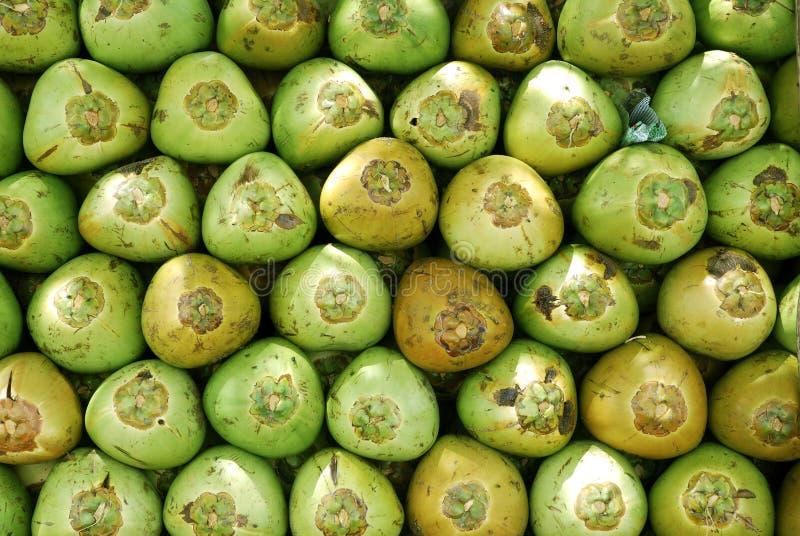 Kokosnuss-Muster stockfotos
