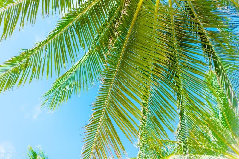 Kokosnuss-Palme mit blauem Himmel lizenzfreie stockfotografie