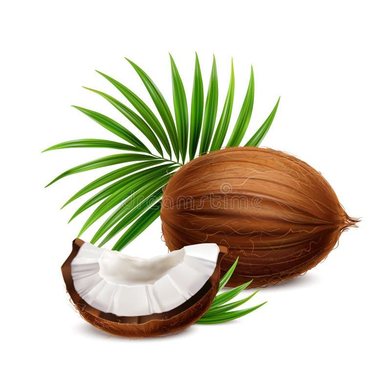 Kokosnuss-realistisches Bild vektor abbildung