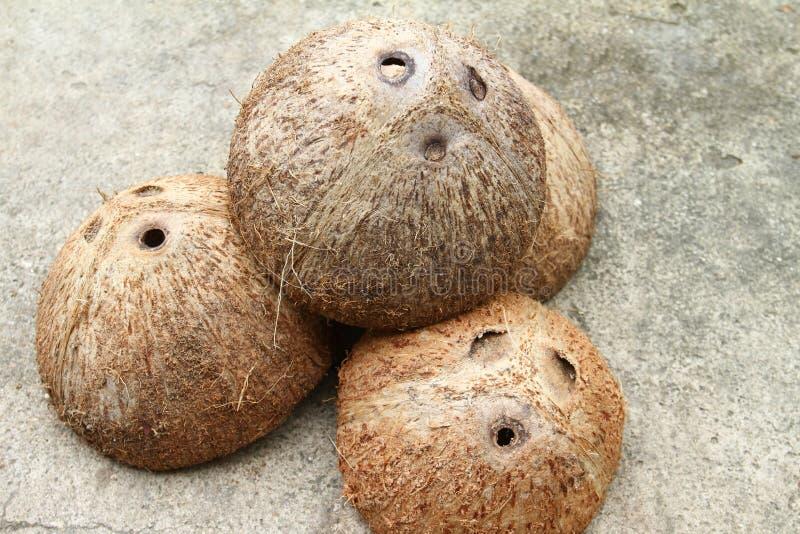 Kokosnussabdeckung lizenzfreies stockfoto