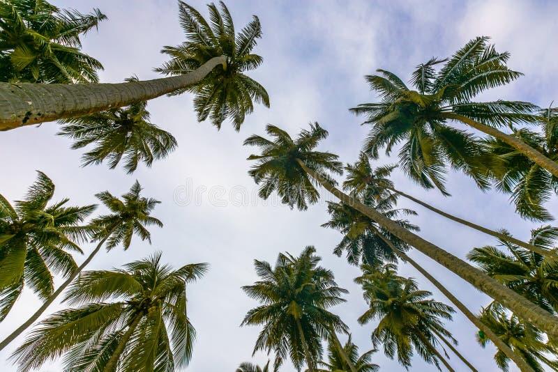 Kokosnussbäume Andaman lizenzfreies stockbild
