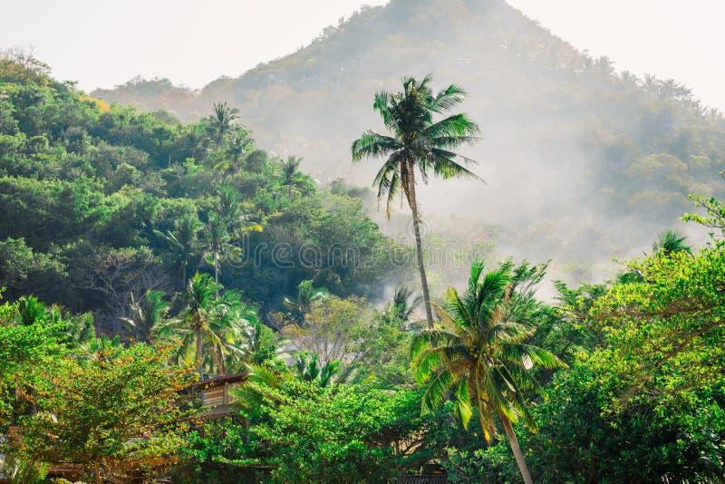 Kokosnussbäume auf dem Hintergrund von tropischen Waldbergen auf einer Tropeninsel in Thailand Heißer sonniger Tag stockbilder