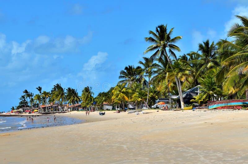 Kokosnussbäume durch das Meer stockfotos