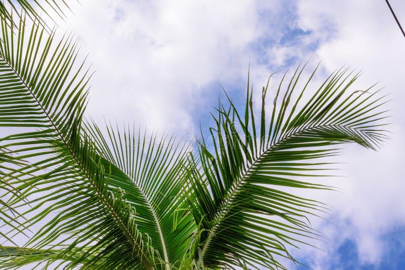 Kokosnussbäume gegen blauen Himmel Palmen an der tropischen Küste stockfotos