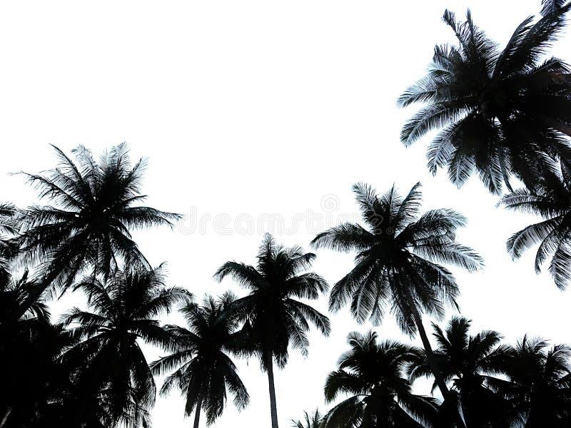 Kokosnussbauernhof lizenzfreie stockbilder