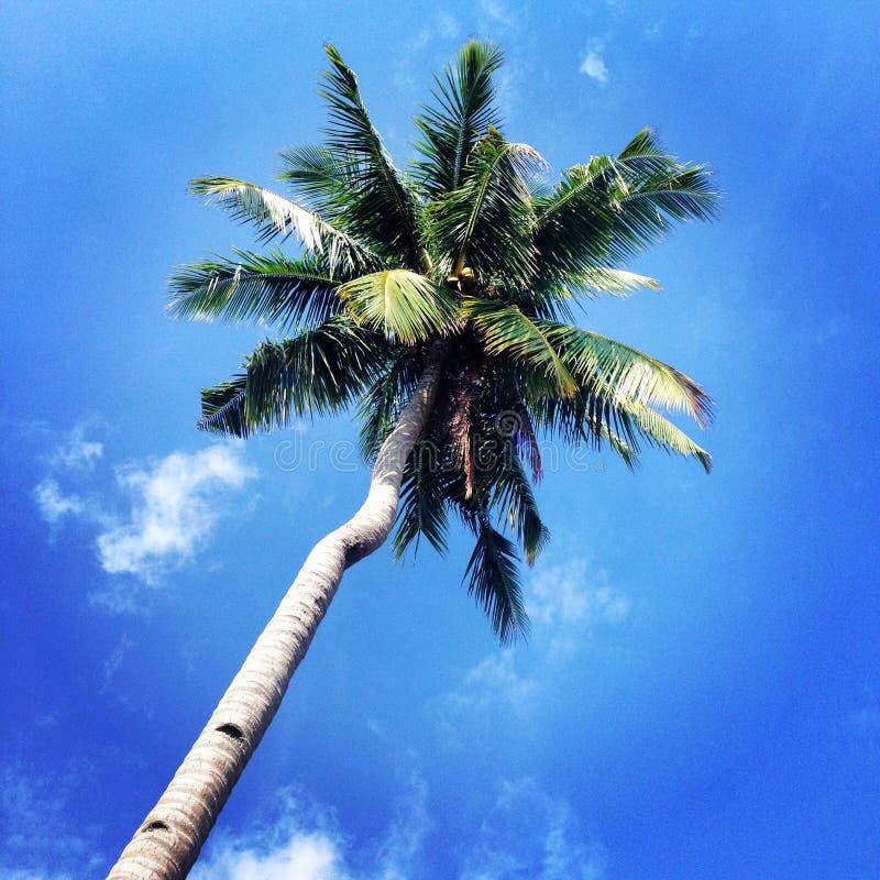 Kokosnussbaum in der Tropeninsel lizenzfreie stockfotos