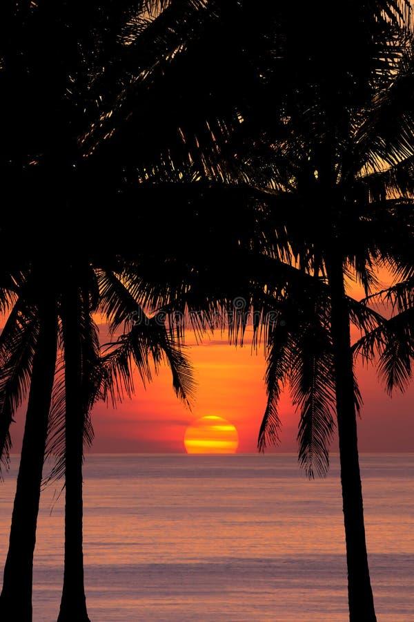 Kokosnussbaumschattenbild am Sonnenuntergang stockfoto