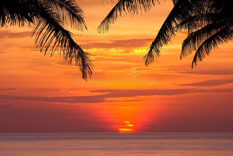 Kokosnussbaumschattenbild am Sonnenuntergang lizenzfreie stockfotografie