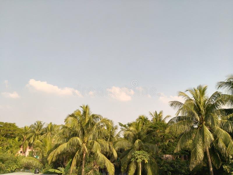 Kokosnussbaumstände in Folge lizenzfreie stockbilder