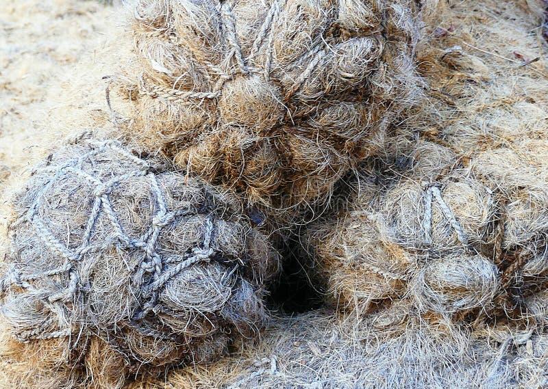 Kokosnussfaser oder -Coir zur Einrichtung von Feuchtgebieten für die Umwelt stockbild