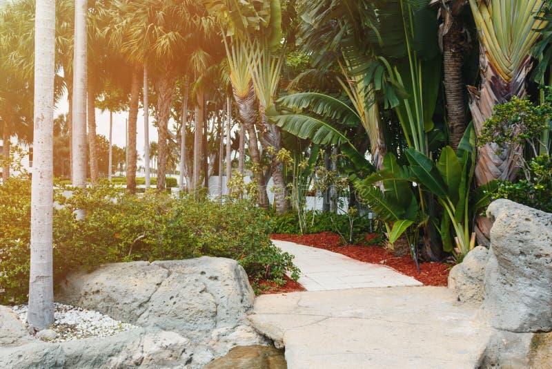 Kokosnussgrün-Palmen unter der Sonne, tropischer exotischer schöner Hintergrund Sommer, Feiertage, Luxus-Resort, Tourismusferien stockfoto