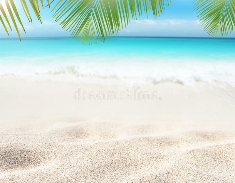 Kokosnusspalmblätter, die über dem tropischen weißen sandiger Strand- und Türkismeer hängen stockfoto