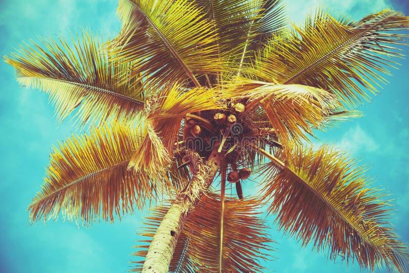 KokosnussPalmeblätter unter hellem Himmel lizenzfreie stockbilder