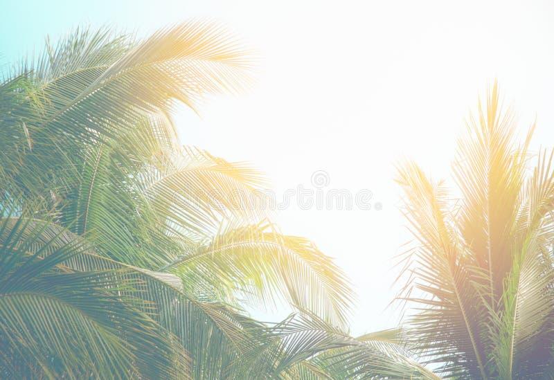 KokosnussPalmen mit hellem Filter der Fülle stockbild